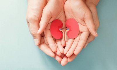 https://www.whitehallofdeerfield.com/wp-content/uploads/2021/03/PHOTO-Shutterstock-WH-2021-KIDNEYS-Hands-holding-tiny-kidney-models-400x240.jpg